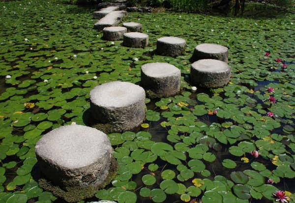 Online Meditation Retreat: The Samadhi Factors