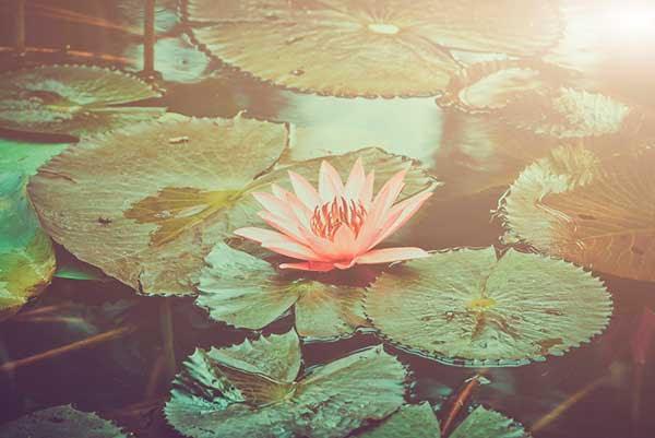 Online Meditation Retreat with Ajahn Pavaro